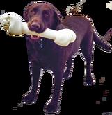 Dog Image